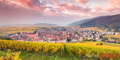 Panoramic sunrise over autumn vineyards,  Riquewihr, Alsace, France