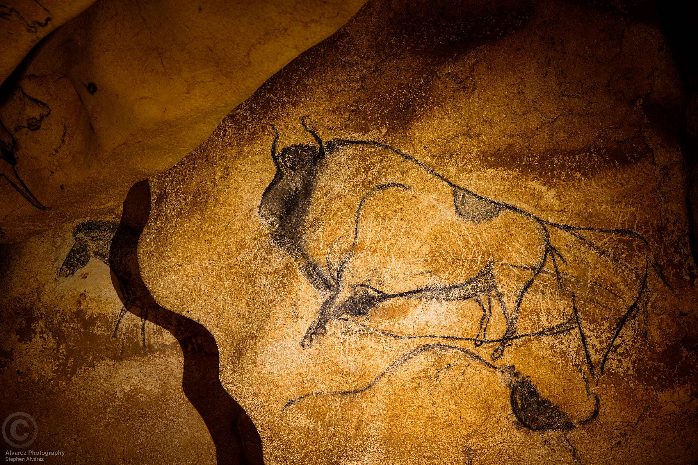 Bison in Chauvet Cave, Ardeche, France
