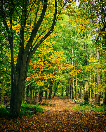 Massys_woods_Autumn_2016