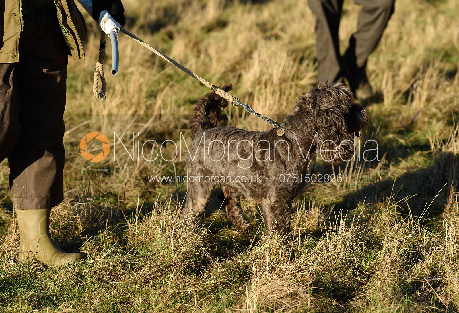 Gundog - Barnwell Shoot