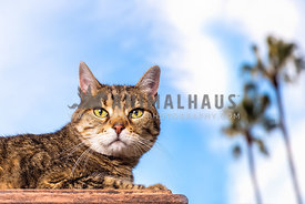 a cat  lounges beneath blue skies and palm trees