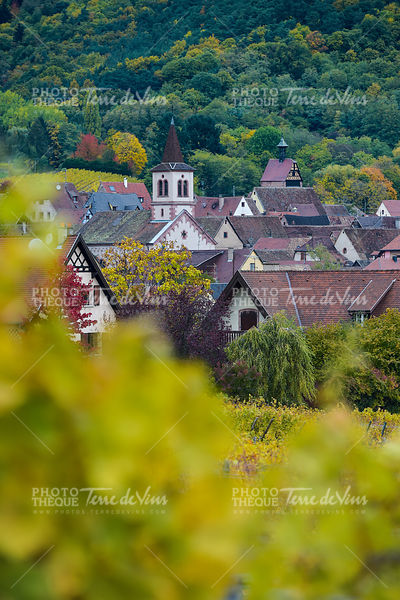 Church and village, Alsace Vineyard, French vine