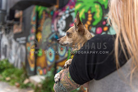 Chihuahua mix in dog mom's tattoed arms with graffiti on wall