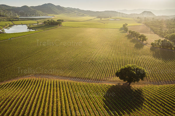 Aerial view of an Atlas Peak vineyard in Napa Valley