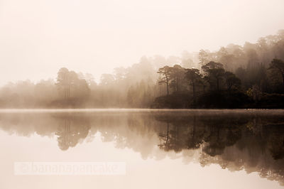 Misty dawn in Glen Affric - BP2987
