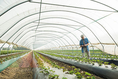 Farmer controlling plants in a greenhouse