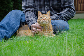 An Orange Tabby cat sits with his owner on the green grass