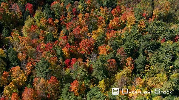 Orbiting above mixed forest in fall colors