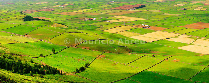 Pasture fields in Vale da Achada. Terceira, Azores islands, Portugal