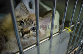 A small rescue cat looks through the bars of the cage she is in