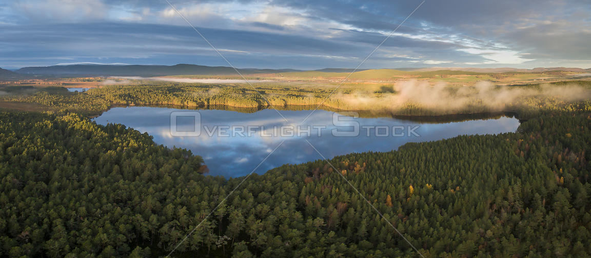 Scots pine (Pinus sylvestris) forest surrounding Loch Garten in morning light, Abernethy Forest, Cairngorms National Park, Sc...