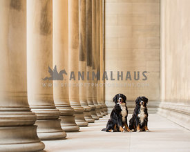 two dogs sitting in urban setting with columns