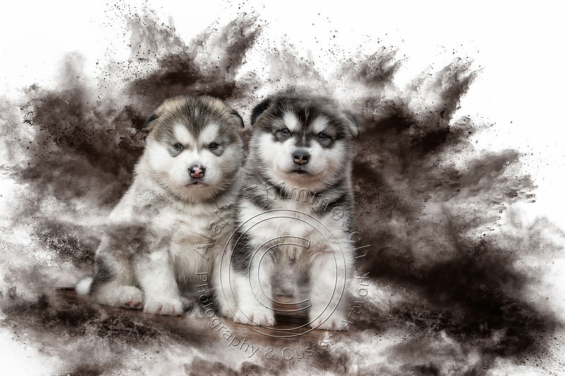 Art-Digital-Alain-Thimmesch-Chien-33
