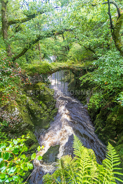 Roman Bridge (Vertical)- Near Betws-y-Coed, Wales