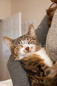 sleeping-tabby-cat-in-owners-arms