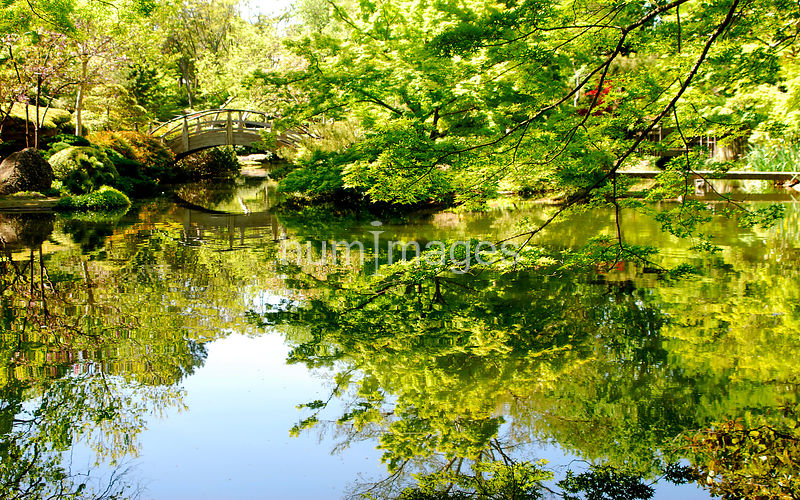 Reflections of trees at Fort Worth Botanical Garden (Japanese gardens)