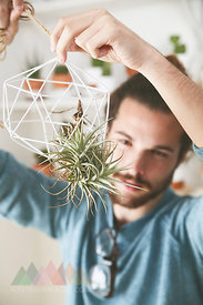 Young man putting air plant in a pendant