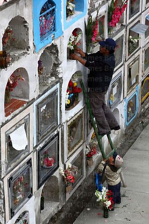 Man decorating tomb in cemetery with fresh flowers for Todos Santos festival, La Paz, Bolivia