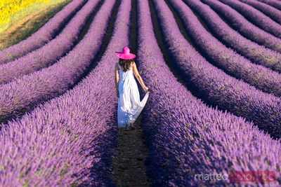 Woman in a lavender field in full bloom, Provence, France