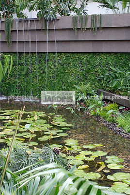Contemporary garden, Exotic garden, Tropical garden, Water garden, Foliage wall, Green wall, Vegetation wall, water lily, Wat...