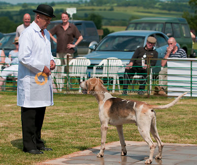 The Best Stallion Hound Class, Blaston Hound Show 2010