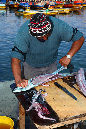 Fisherman stripping skin from freshly caught snoek ( Thyrsites atun ) , Caldera , Region III , Chile
