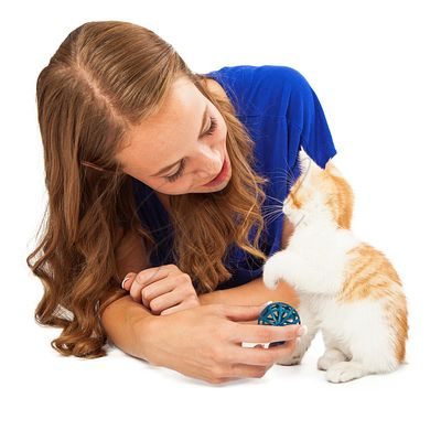 Girl Playing With Rescue Kitten