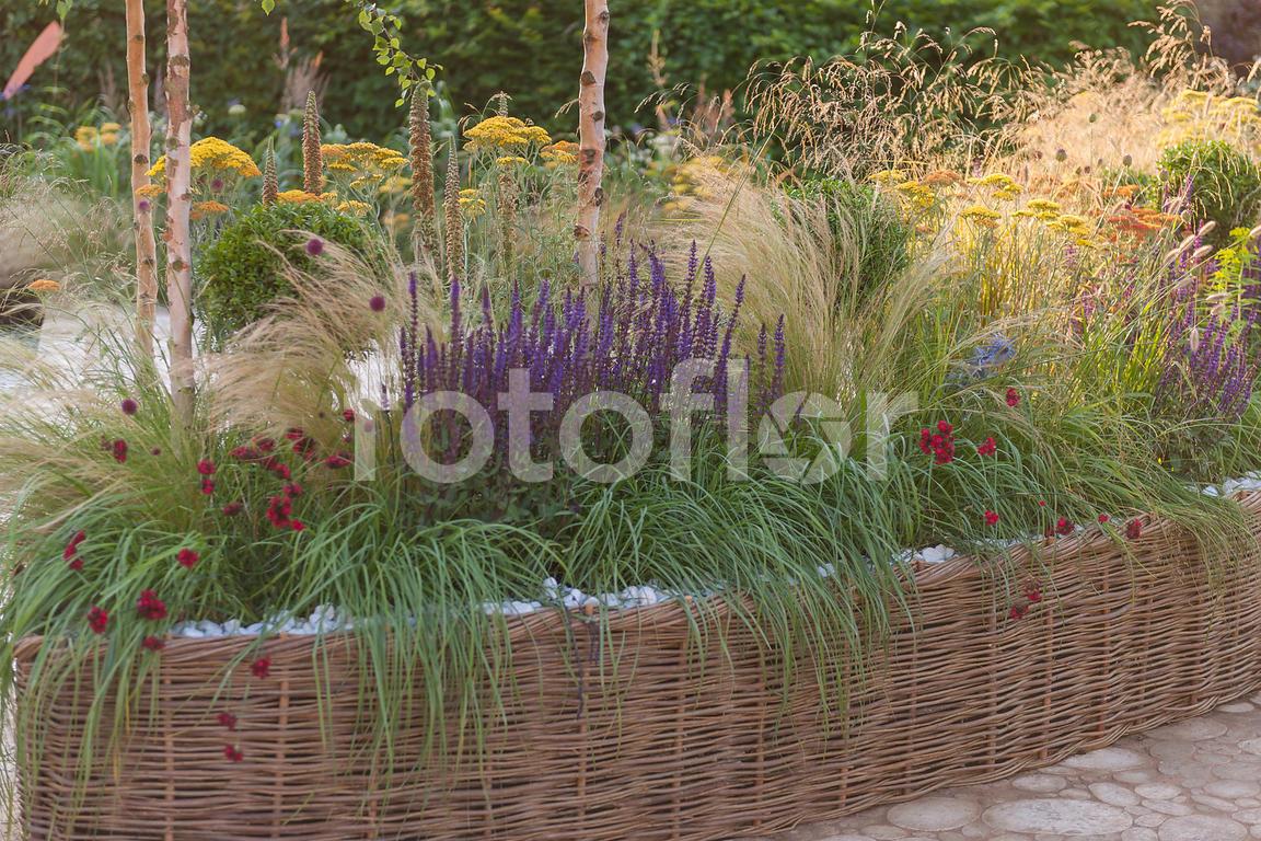 Les Plus Belles Graminées photo de salvia,dianthus,bordure tressée de plantes vivaces