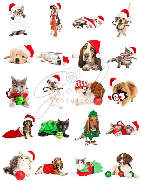 Collection of Dog and Cat Christmas Photos