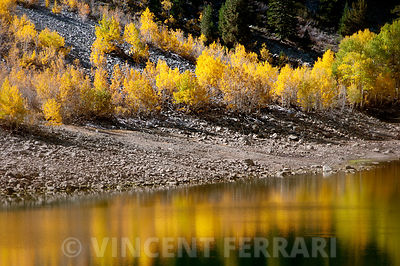 Lundy Lake Aspens