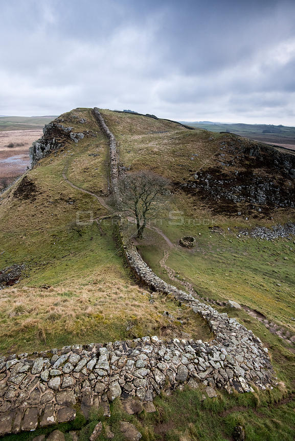 Hadrian's Wall at Sycamore Gap between Steel Rigg and Housesteads on The Whin Sill, a layer of hard intrusive, volcanic Doler...