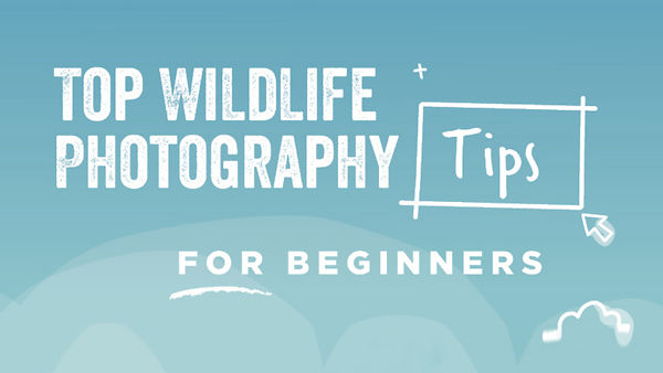 Top Wildlife Photography Tips