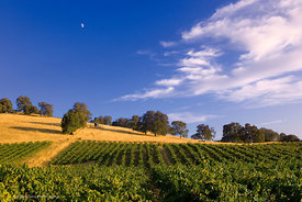 Vineyards and Moon #3