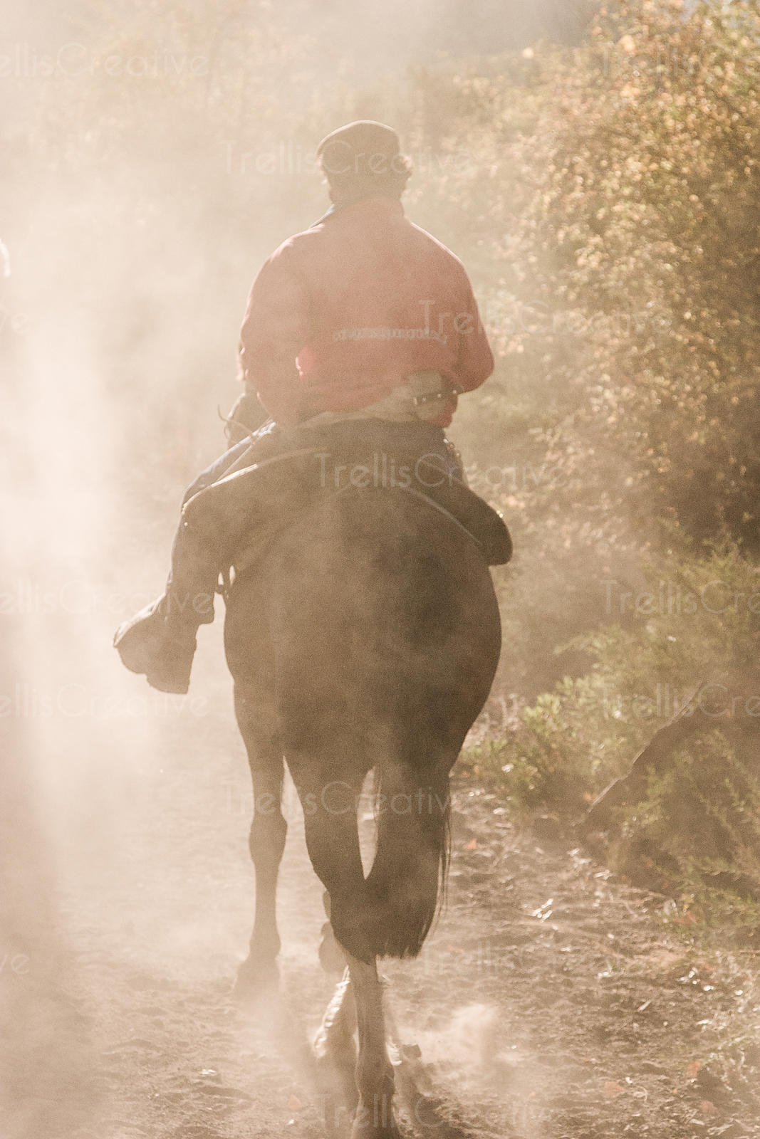 Working man rides his horse to work on a dusty trail.  Sunlight filters through the dust, bushes to his right.