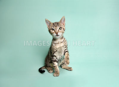 Tabby kitten on light green fabric