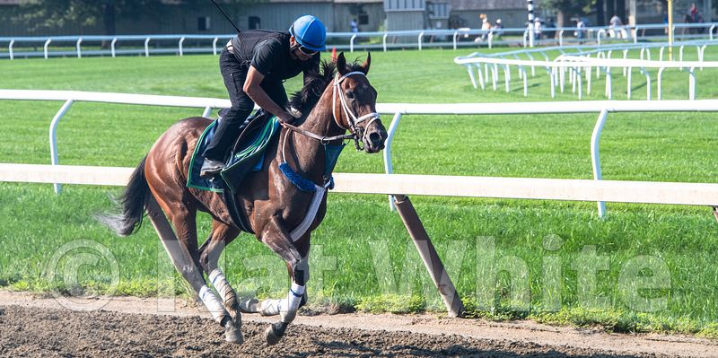Saratoga_training-9248_August_06_2018_NAT_WHITE