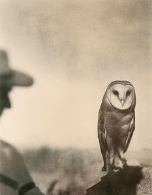 barn owl  and man