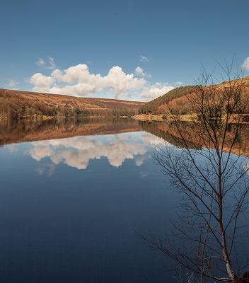 Silver birch Derwent reservoir