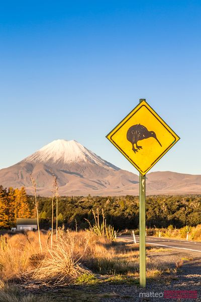 Kiwi sign on the road to mt Ngauruhoe, Tongariro, New Zealand