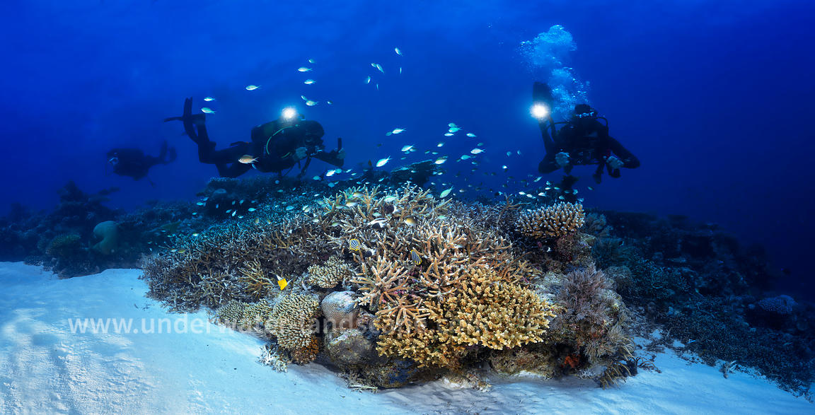 Reef of Mayotte