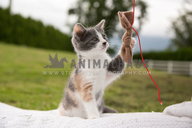 Small kitten playing with string outside in yard
