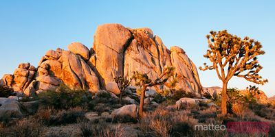 Sunset at Joshua Tree National Park, California, USA