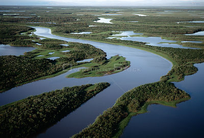 Aerial view of Taiga forest, Mackensie river delta, Inuvik, Yukon, Canada