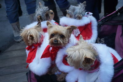 2018 Santacon in New York City photos