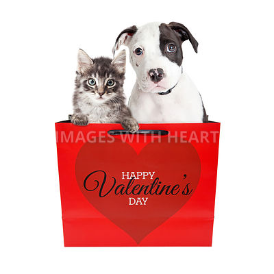 Cute Puppy and Kitten in Valentine's Day Bag