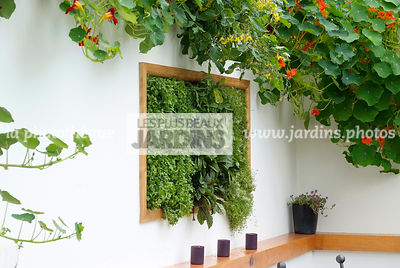 garden designer, Mini potager, Mini Vegetable garden, pearlwort, Tropaeolum majus, Foliage wall, Green wall, Vegetation wall, Wall decoration
