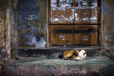 A stray dog sleeping at night in Bowbazar, Kolkata, India.