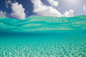 Under/over image in Northwest Point shallows, Provo, Turks & Caicos Islands