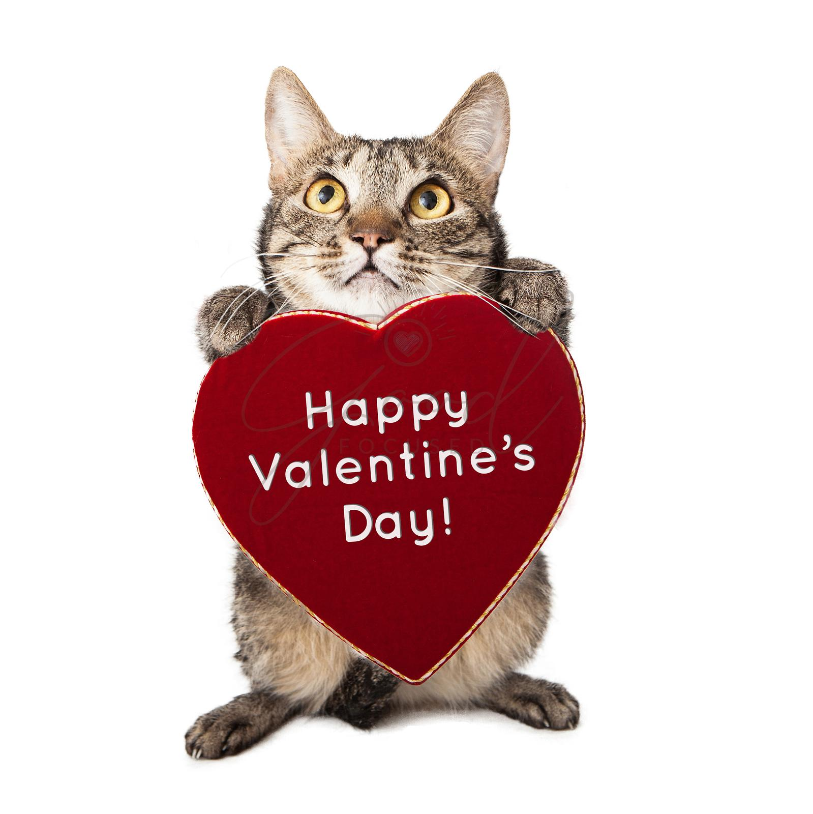 Cat With Valentines Day Heart
