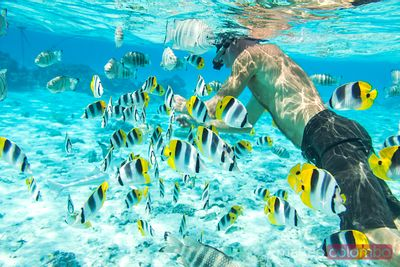Man underwater with fishes in the lagoon of Bora Bora, French Polynesia
